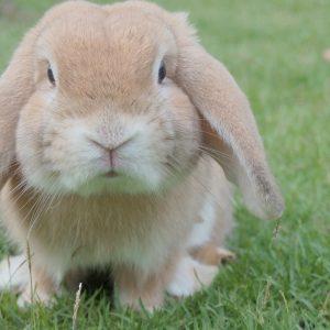 bunny-1149060_1920