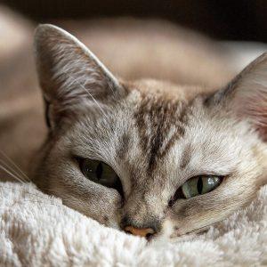 cat-1978356_1920