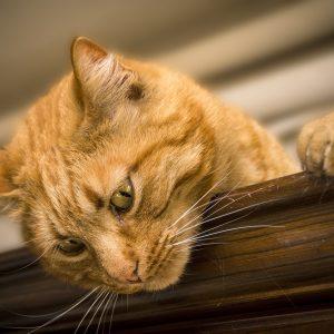 cat-2184682_1920