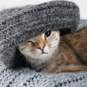 cat-2201460_1920