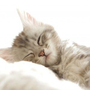 cat-2549109_1920