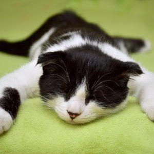 cat-2605502_1920