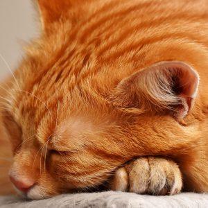 cat-3080966_1920