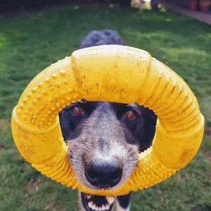 dog-3173214_1920