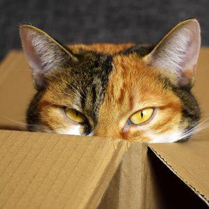 lucky-cat-2780044_1920