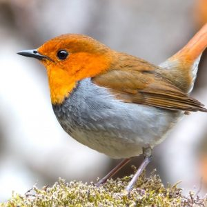 oiseau3